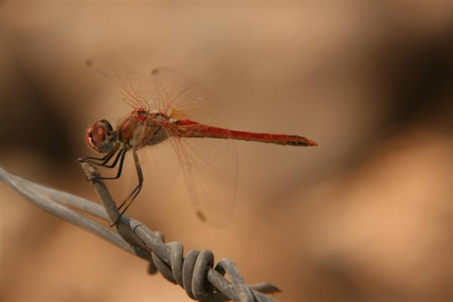 DRAGONFLY 2 12-8-09